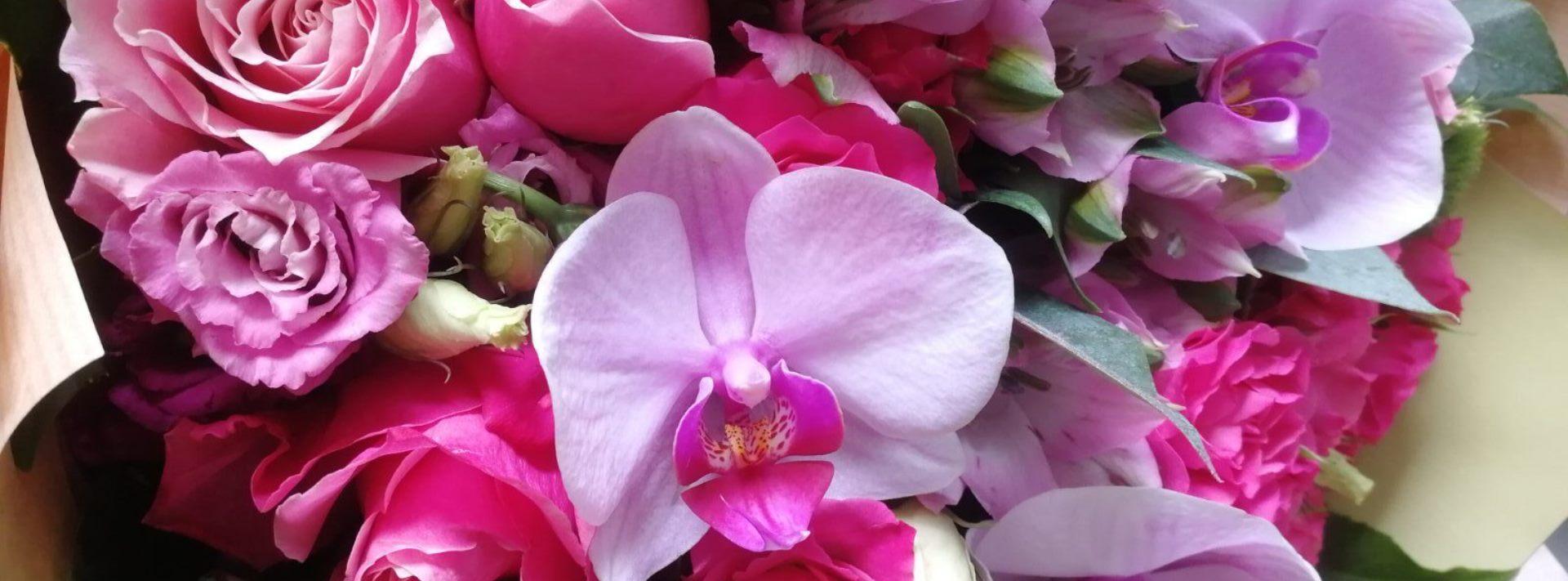 blog-header-002-vas-cvetni-ljubimac-biljke-u-kuci
