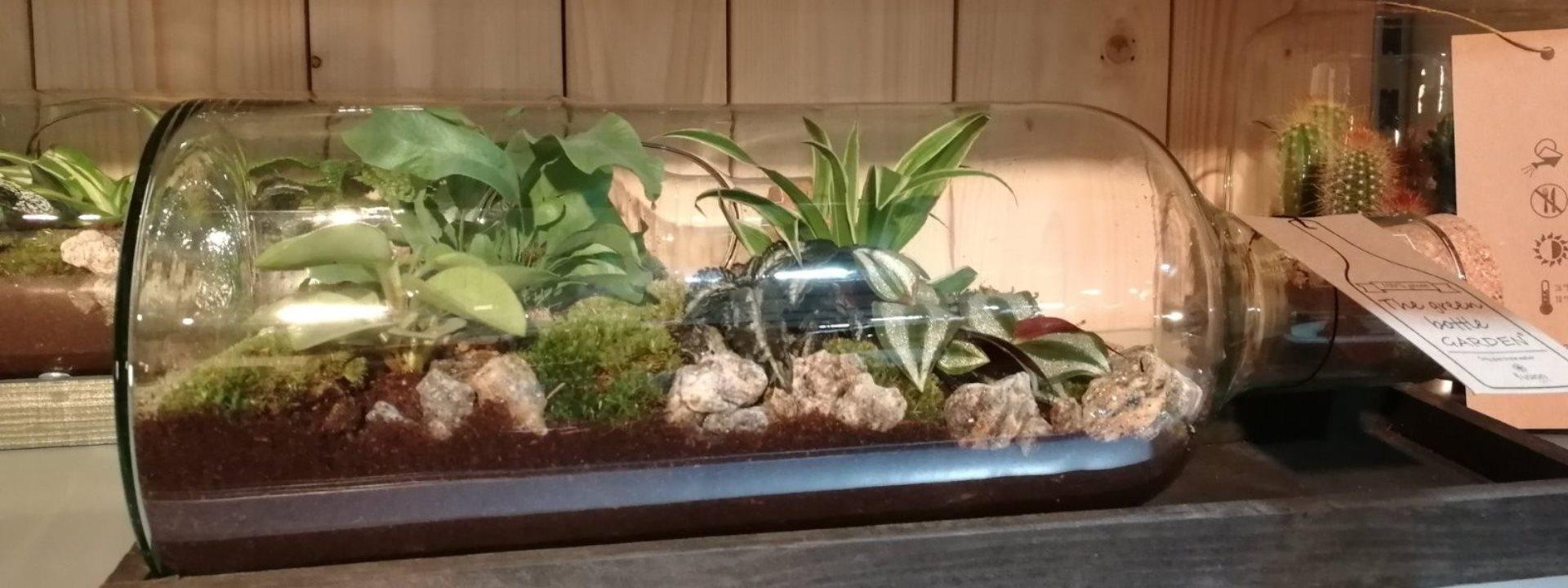 header-blog-001-osnovne-mere-nege-biljaka-u-enterijeru
