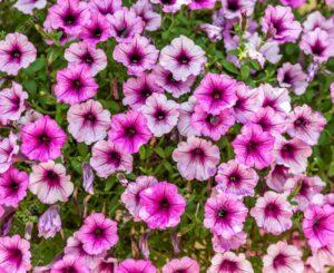 biljke za sunčana mesta 1mesta 1