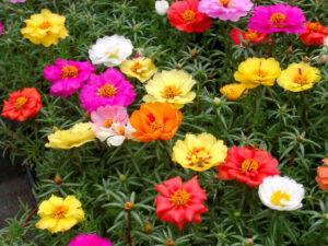 Biljke za sunčana mesta 7